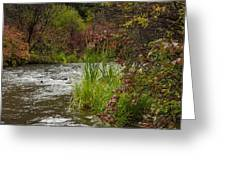 Along The Stream Greeting Card