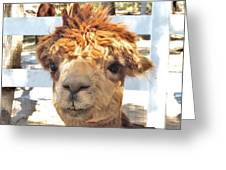 Alpaca Bed Head Greeting Card