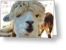 Alpaca Hair Do Greeting Card