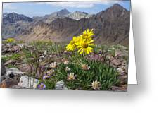 Alpine Flowers Greeting Card