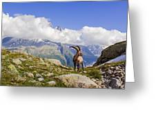 Alpine Ibex Greeting Card