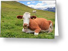 Alpine Pasture With Cow Greeting Card