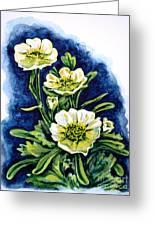 Alpine Ranunculus Greeting Card by Zaira Dzhaubaeva