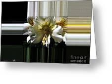Alstroemeria Named Marilene Staprilene Greeting Card