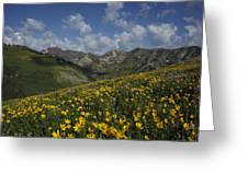 Alta Bloom Greeting Card
