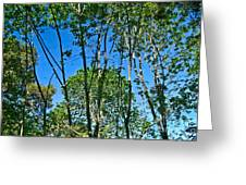 Alternate Reality - Reflected View Of The Forest From A Pond In Garland Ranch Park In Carmel Valley. Greeting Card