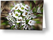 Alyssium Reflected Greeting Card
