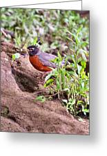 Am Robin Greeting Card