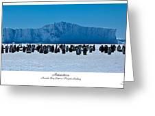 Amanda Bay Rookery Greeting Card by David Barringhaus
