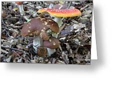 Amanita Muscaria And Edible Boletus Greeting Card