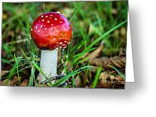 Amanita Muscaria Greeting Card