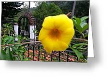 Amarillo La Flor Greeting Card