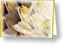 Amaryllis-6 Greeting Card