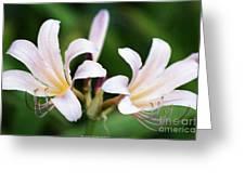 Amaryllis Belladonna Naked Ladies Greeting Card