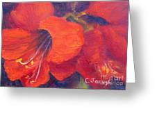 Amaryllis Flower Greeting Card