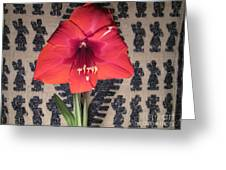 Amaryllis Flower With Guatemalan Mountain Blanket Greeting Card by Elizabeth Stedman