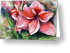 Amaryllis Greeting Card by Lenore Gaudet