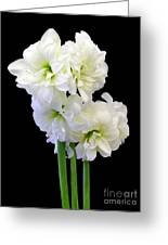 Amaryllis On Black Greeting Card