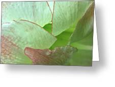 Amaryllis Petals Greeting Card