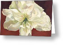 Amaryllis With Red Greeting Card
