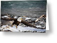 Amazing Bald Eagle  Greeting Card