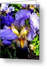 Amazing Iris Greeting Card