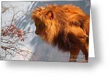 Amazing Male Lion Greeting Card
