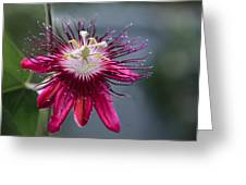 Amazing Passion Flower Greeting Card