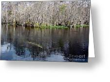 Reflections - On The - Silver River Greeting Card