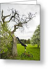 Amazing Stretching Exercise - Bmx Flatland Rider Monika Hinz Uses A Tree Greeting Card