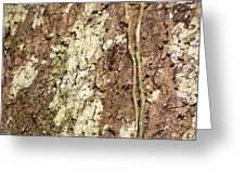 Amazon Ant Greeting Card