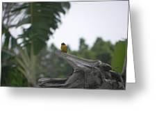 Amazon Bird 1 Greeting Card