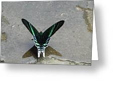 Amazon Butterfly 3 Greeting Card