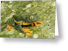Amazon Leaf Frog Greeting Card