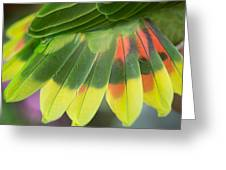 Amazon Parrots Feathers Abstract Greeting Card