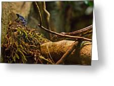 Amazon Tree Boa Greeting Card