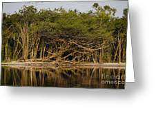 Amazon Trees Greeting Card