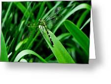 Atchafalaya Dragonfly Greeting Card