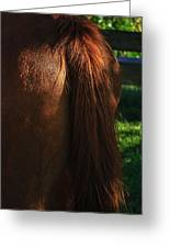 Amber Horse Tail Greeting Card