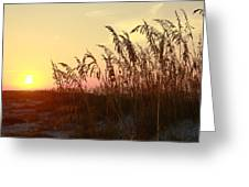 Amber Waves Of Oats Greeting Card