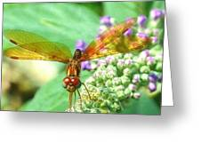 Amber-wing Dragonfly 2 Greeting Card