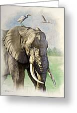 Amboseli Morning   Greeting Card