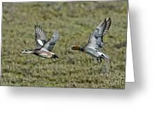 American & Eurasian Wigeons Greeting Card