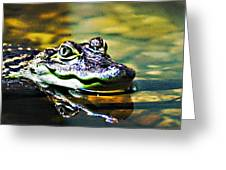 American Alligator 1 Greeting Card
