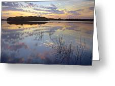 American Alligator Everglades Np Florida Greeting Card