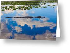 American Alligator Swimming Through The Clouds Greeting Card
