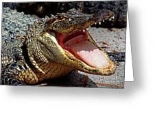 American Alligator Threat Display Greeting Card