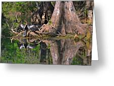 American Anhinga Or Snake-bird Greeting Card by Christine Till