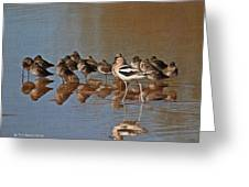 American Avocet And Sleeping Dowitchers Greeting Card