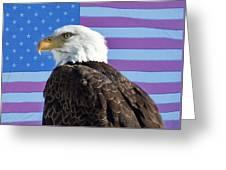 American Bald Eagle 2 Greeting Card